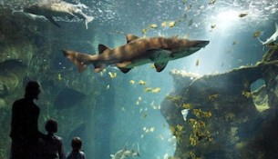 Shark theater © La Rochelle Aquarium
