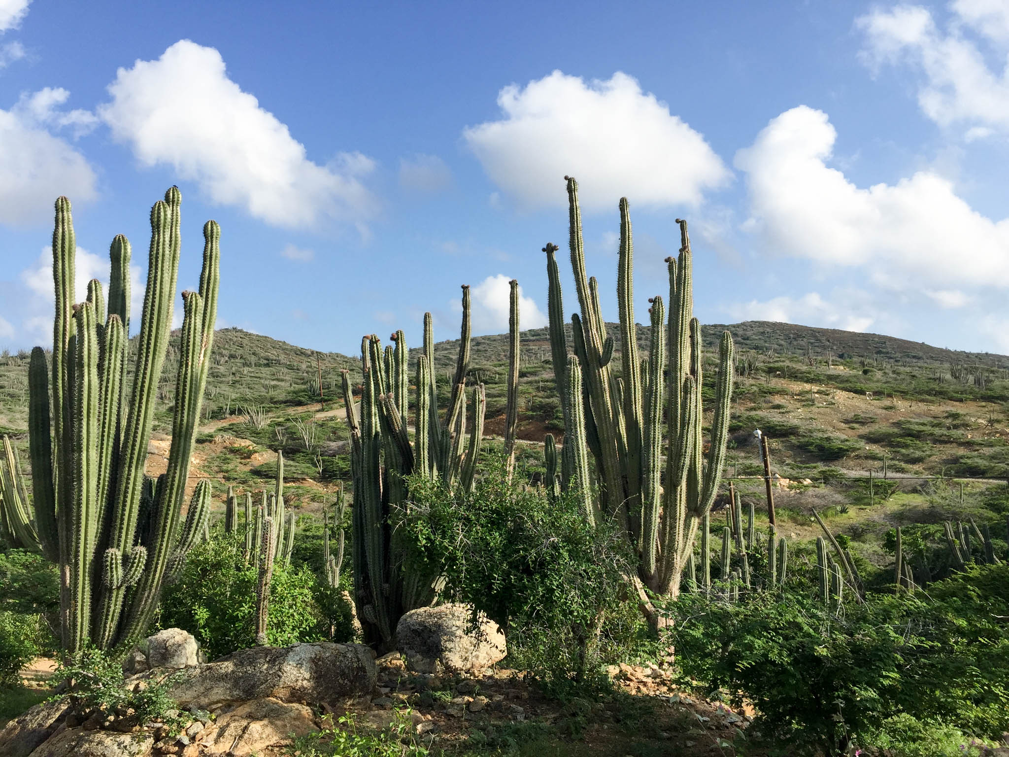 Cactusssen in Arikok National Park