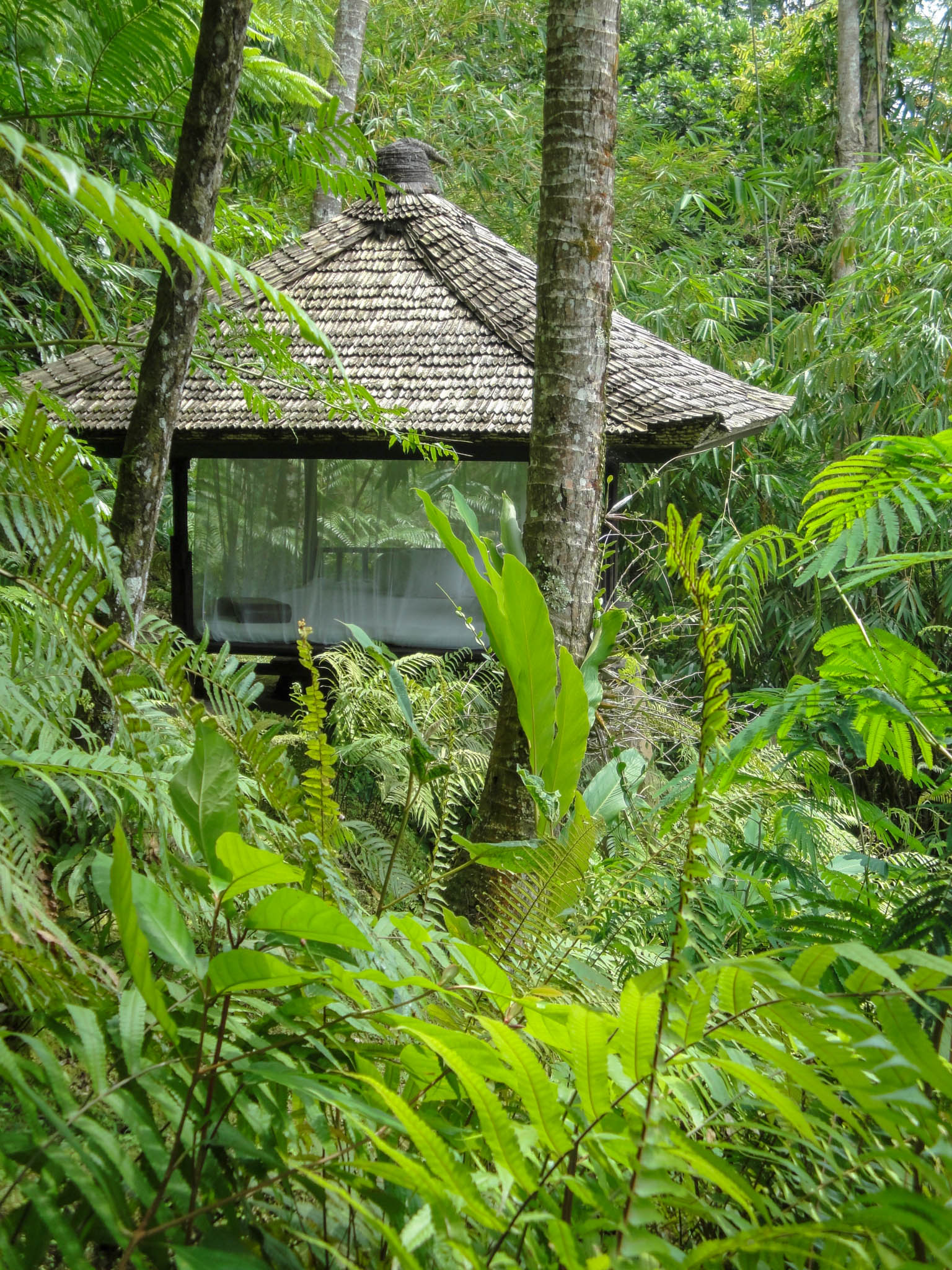 Spahut in de jungle